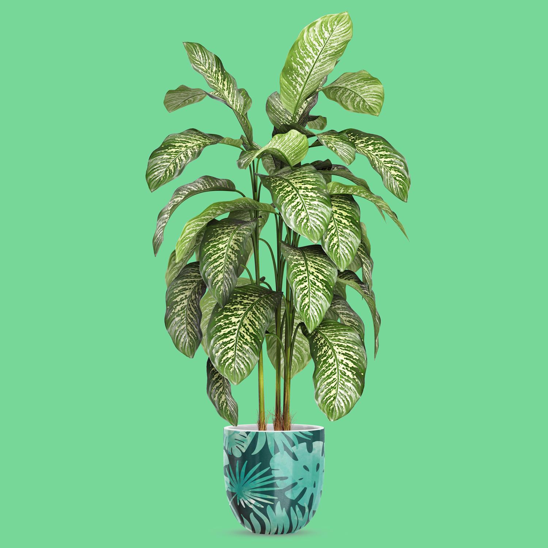 موکاپ گلدان گردی شکل